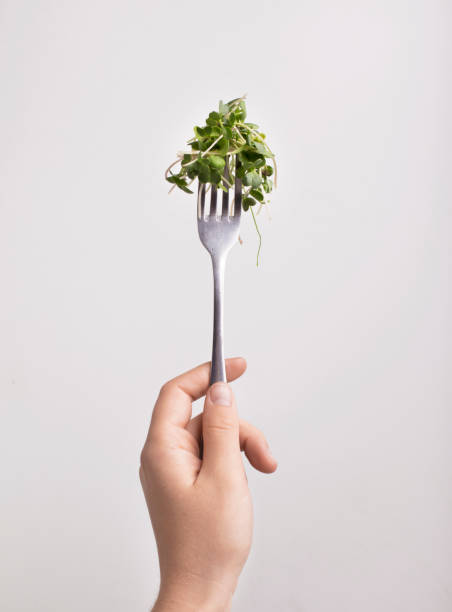 Micro green on fork in female hand over white background Fresh for health. Micro green on fork in female hand over white background, vertical panorama microgreen stock pictures, royalty-free photos & images