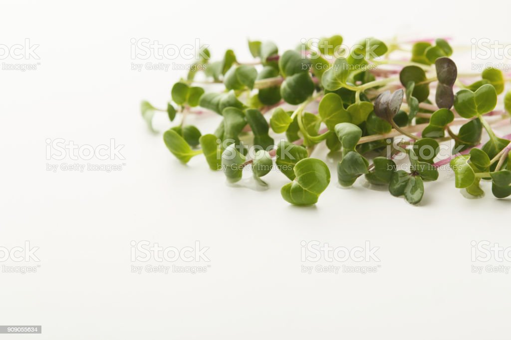 Micro greens sprouts isolated at white stock photo