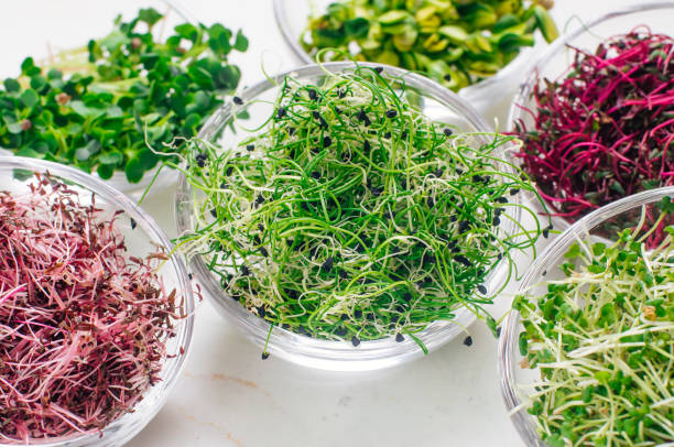 Micro greens sprouts of onion and other sprouts in glass bowls Micro greens sprouts of onion and other sprouts in glass bowls on white background. Selective focus on onion sprouts. microgreen stock pictures, royalty-free photos & images