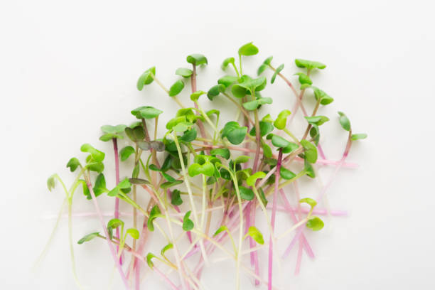 Micro greens top view isolated at white stock photo