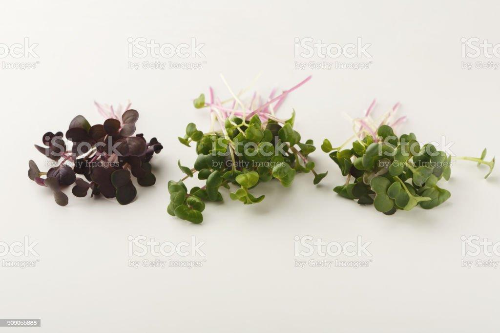 Micro greens variety at white background stock photo