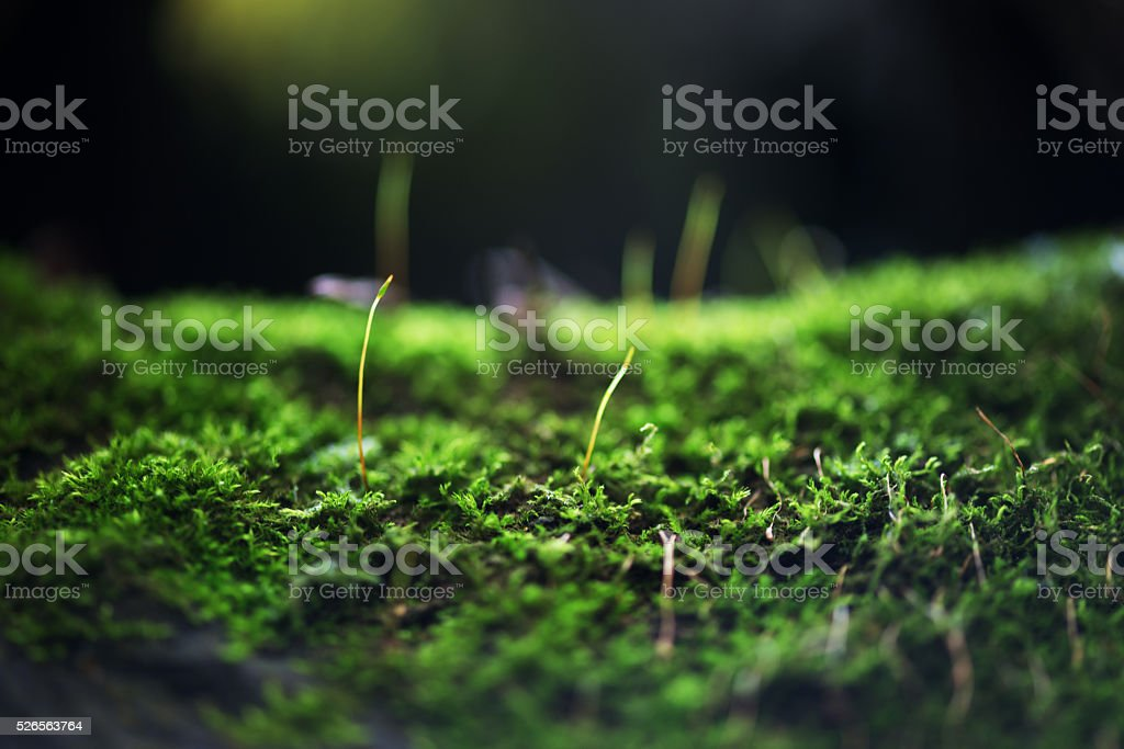 Micro landscape stock photo