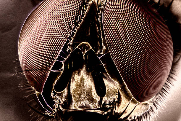 Micro Photo of a Fly stock photo