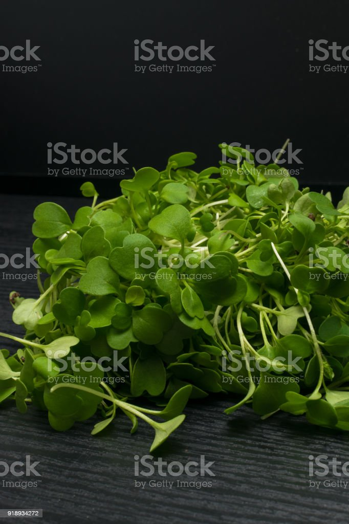 micro salad from green arugula, radish sprouts stock photo