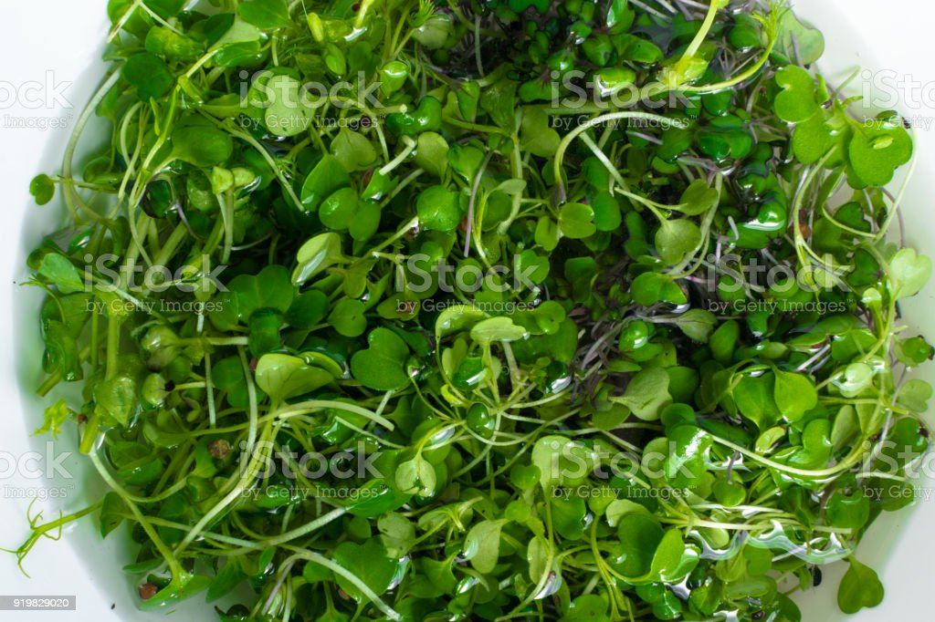 micro salat sprouts of radish and arugula stock photo