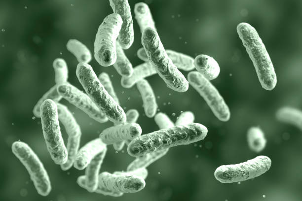 Microbe, microorganism, rod-shaped bacterium stock photo