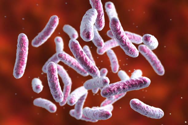 Microbe, microorganism, rod-shaped bacterium stock photo