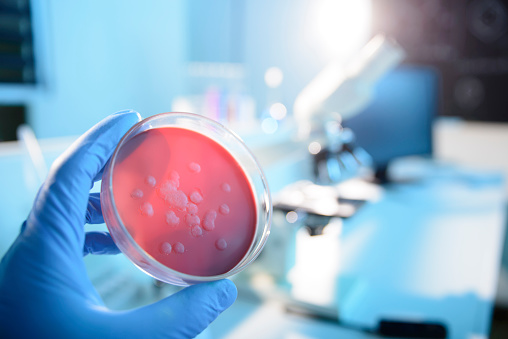 istock Microbiological Culture 496449131