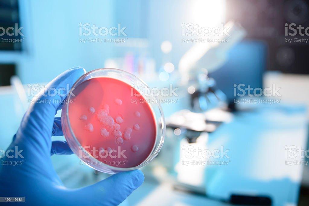 Cultura di microbiologia - foto stock