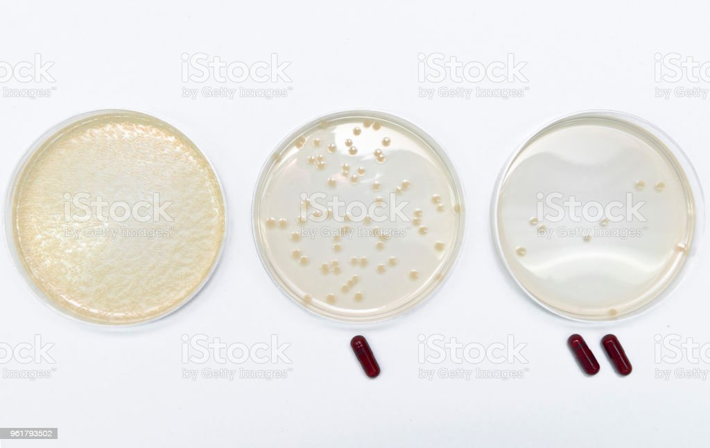 Microbiological experiments for antibiotics development using superbacteria, multi drug resistant bacteria stock photo
