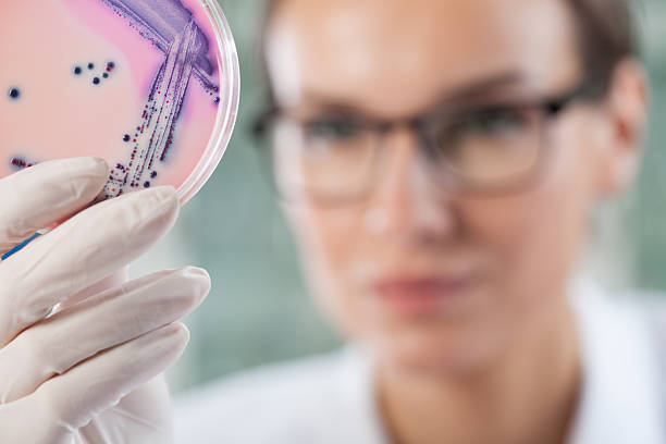 Microbiologist holding a Petri dish with bacteria Microbiologist holding a Petri dish with bacteria, horizontal microbiologist stock pictures, royalty-free photos & images