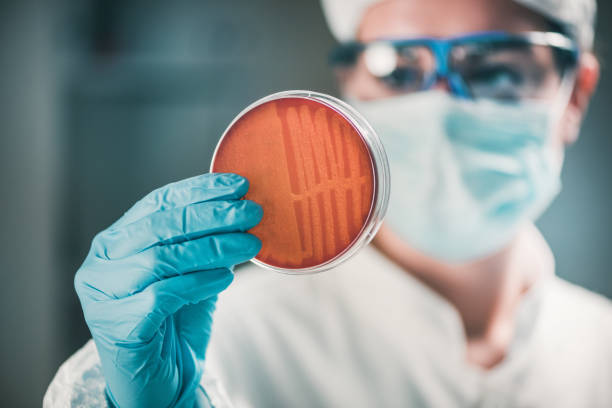 Microbiologist inspecting petri dish, observing bacteria growth Microbiologist inspecting petri dish, observing bacteria growth infectious disease stock pictures, royalty-free photos & images