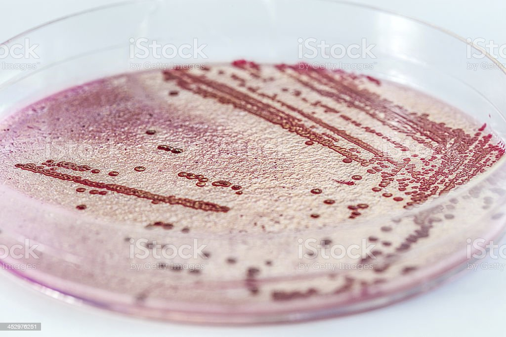 Microbiology royalty-free stock photo