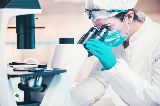 Microbiology, technician working with bacteria strains stock photo