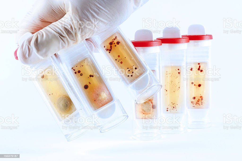 Microbiology test tubes royalty-free stock photo