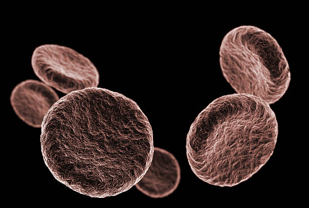 Microcosmic view of floating red blood cells in the dark stock photo
