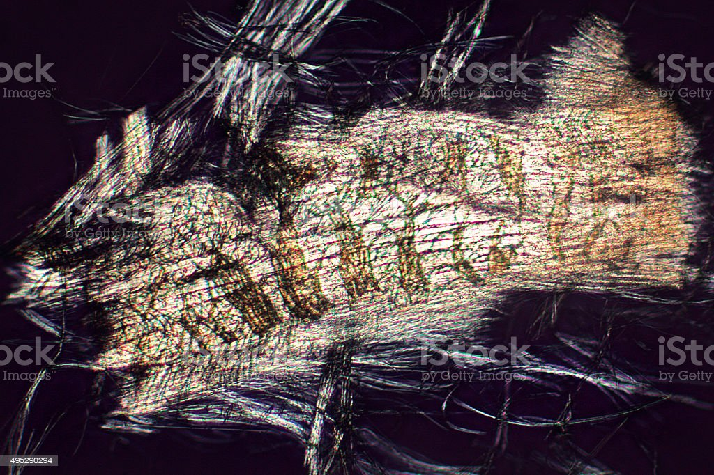 Micrograph abstract of flight muscle cells from a bottle fly. stock photo