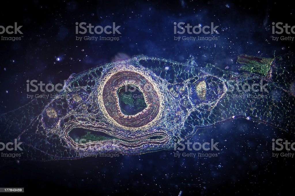 micrograph of blood vessel, artery and vein stock photo
