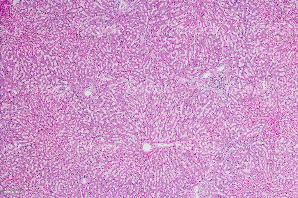 Micrograph Of Liver Tissue He Stain Stock Photo More Pictures Of