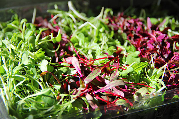 Microgreens Gorgeous assortment of Micro greens microgreen stock pictures, royalty-free photos & images