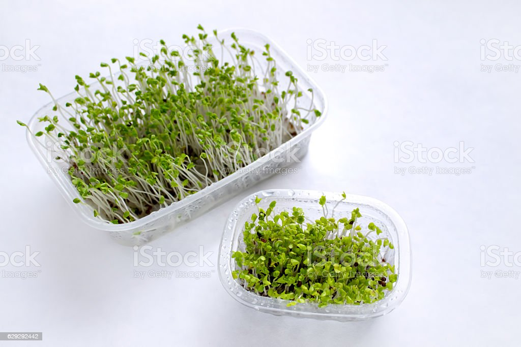 Microgreens stock photo