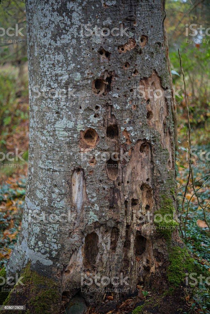 Microhabitat in beech wood stock photo