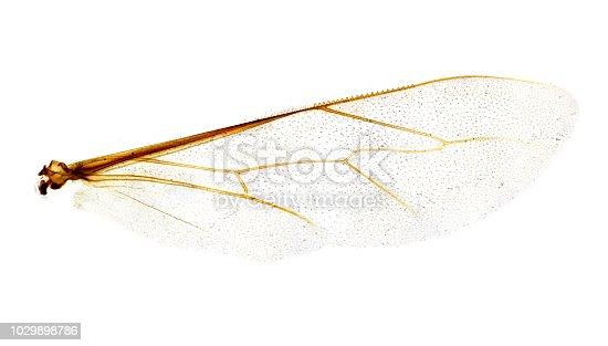 istock Microscope bee wing 1029898786