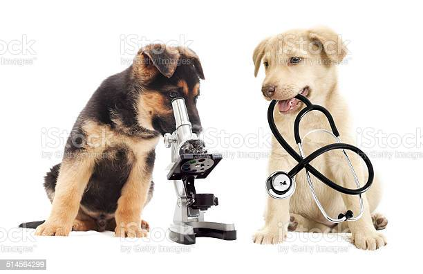 Microscope picture id514564299?b=1&k=6&m=514564299&s=612x612&h=o6jlzgvs85btrtde8mipn6ec6tkvl91y ryp62hzqhm=