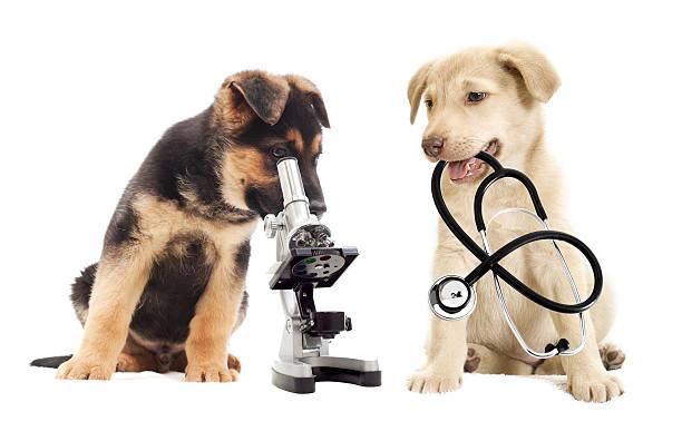 Mikroskop – Foto