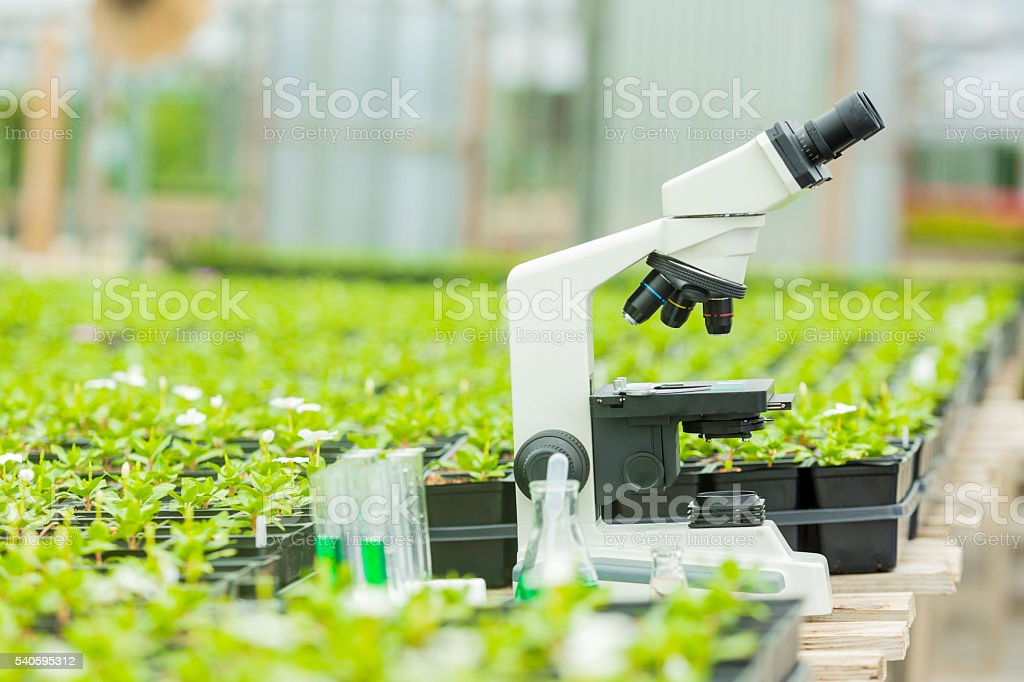 Microscope surrounded by plants stock photo