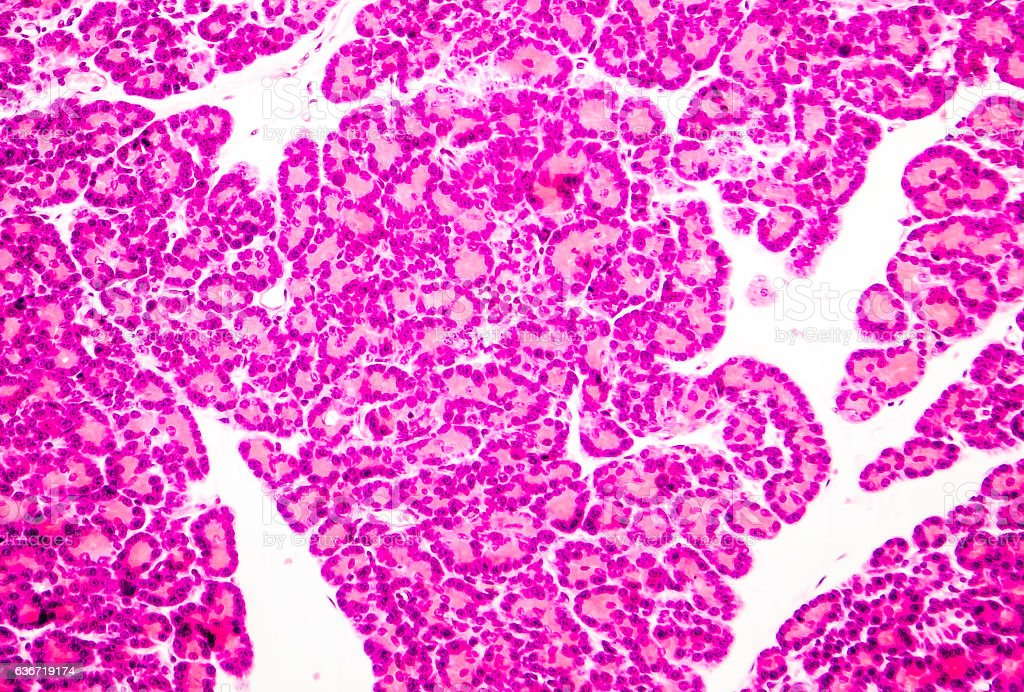 Microscopic photo showing pancreatic tissue royalty-free stock photo