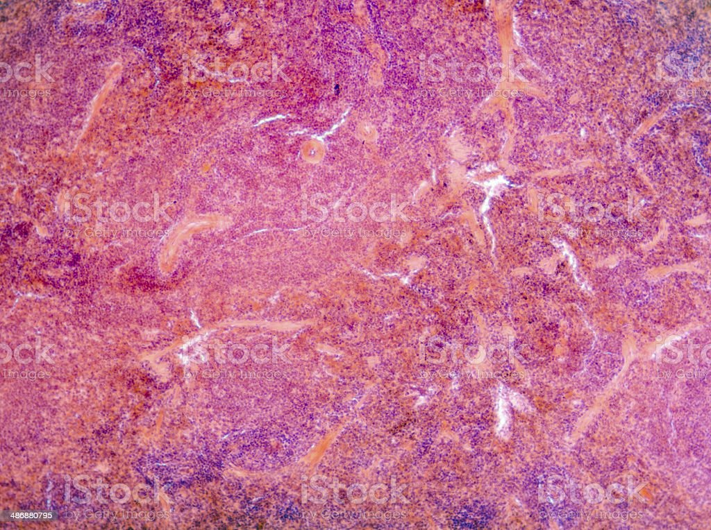 Microscopic Section Of Liver Tissue Stock Photo More Pictures Of