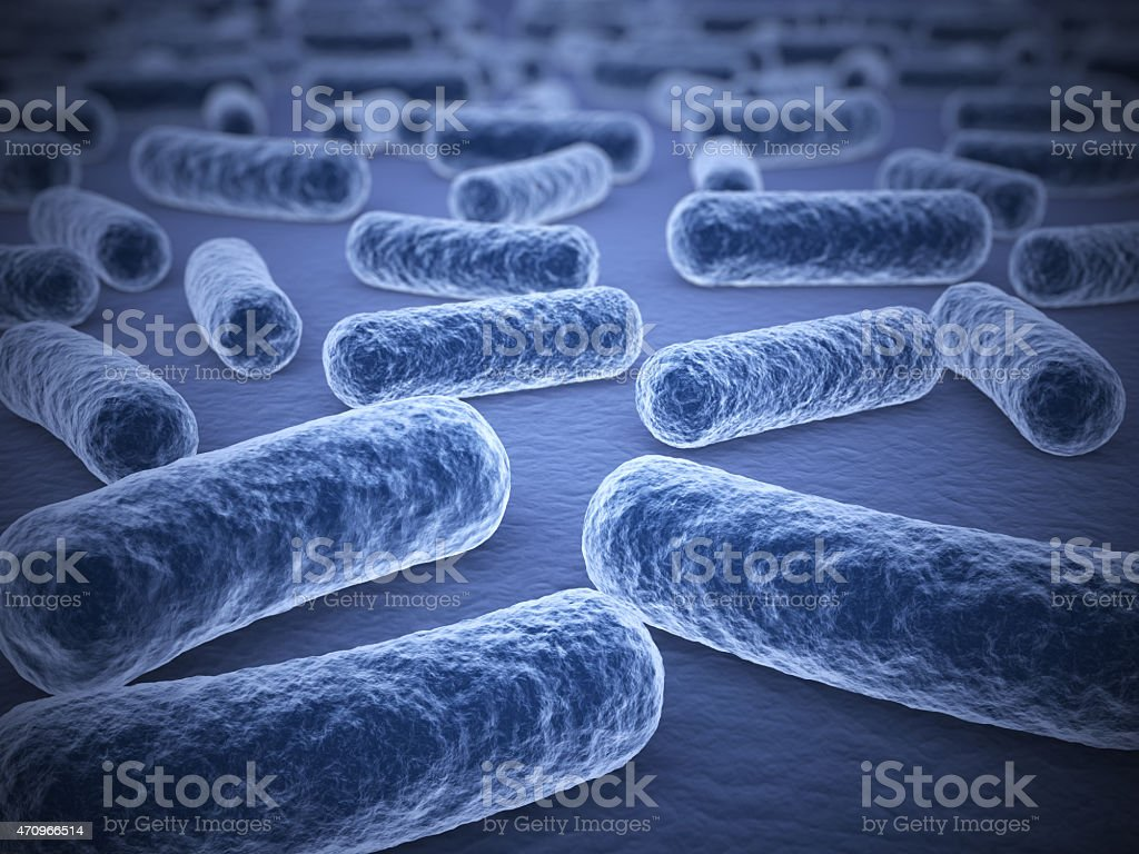 Microscopic view of bar shaped bacteria stock photo