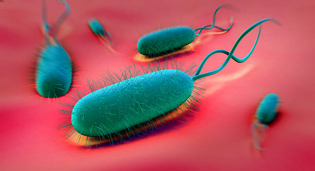 Microscopic view of Helicobacter Pylori Bacterium Helicobacter pylori bacterium high scale magnification stock pictures, royalty-free photos & images