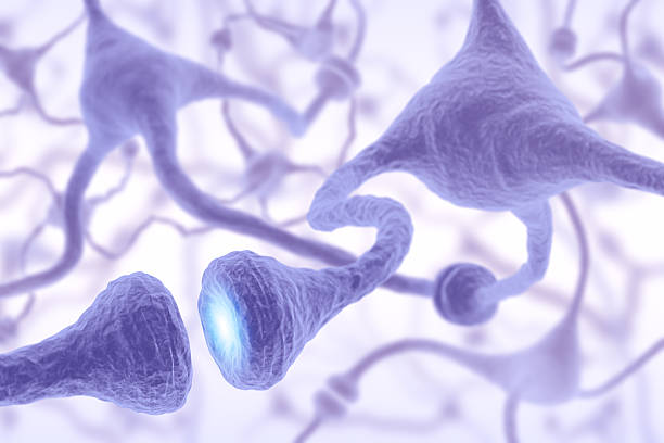 Microscopic view of nerve cell pulsing Interconnected neurons transferring information with electrical pulses. autoreceptor stock pictures, royalty-free photos & images