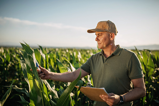 Mid adult farmer inspects his land