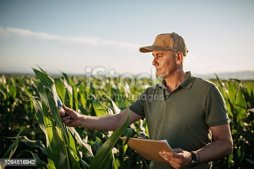 istock Mid adult farmer inspects his land 1264516942