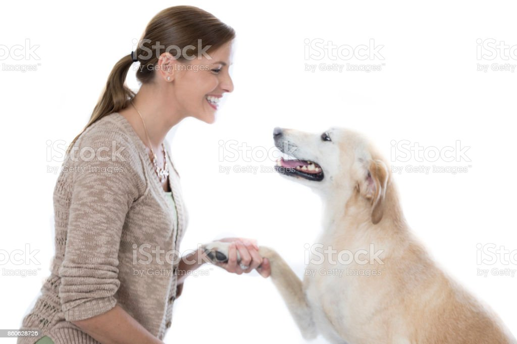 Mid adult female pet owner greets dog stock photo