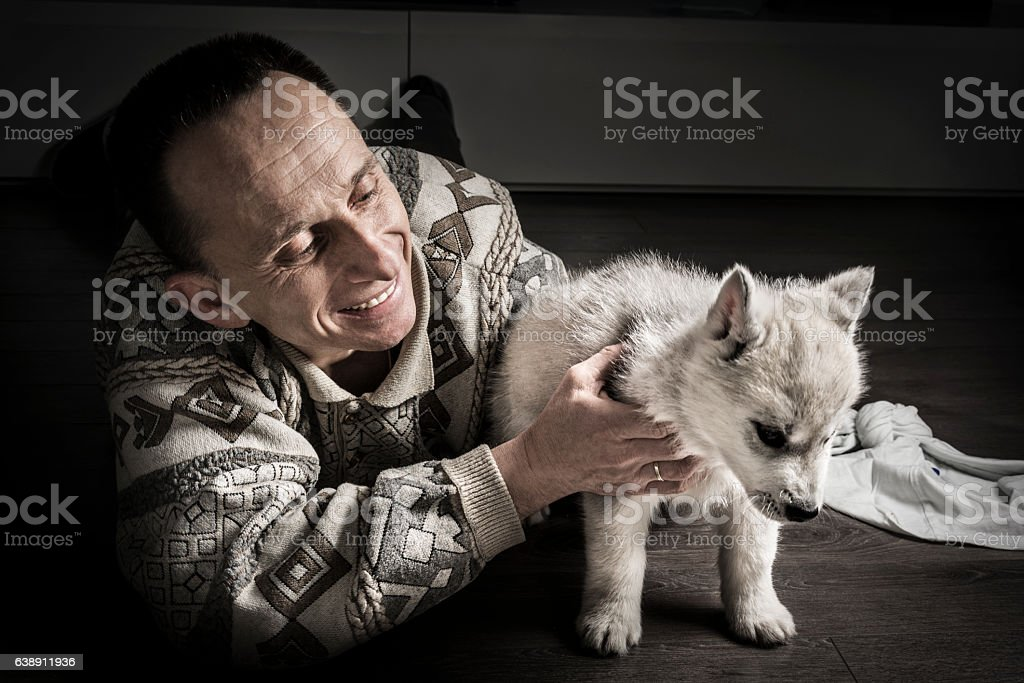 Mid adult men playing with husky puppy stock photo