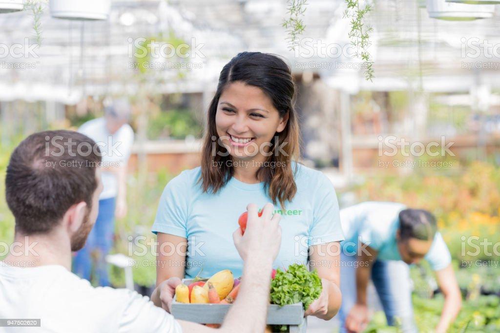 Mid adult woman enjoys volunteering for nursery vegetable harvest stock photo