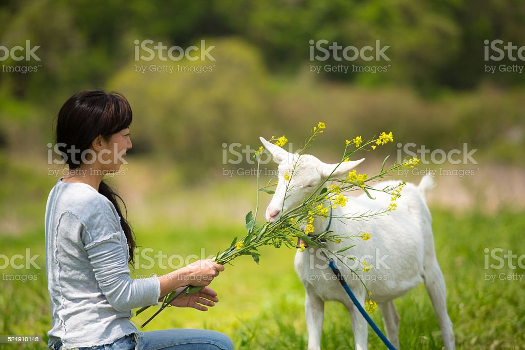 Mid adult woman feeding her pet goat at organic farm stock photo