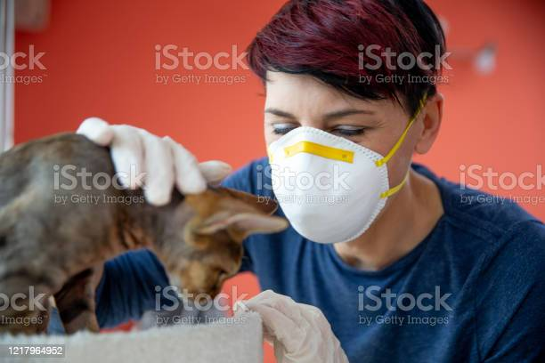 Mid adult woman with protective face mask and gloves stroking a cat picture id1217964952?b=1&k=6&m=1217964952&s=612x612&h=hb6djdzoleof6ertw2wchbz5ikmprrwbx gfpjflhzm=