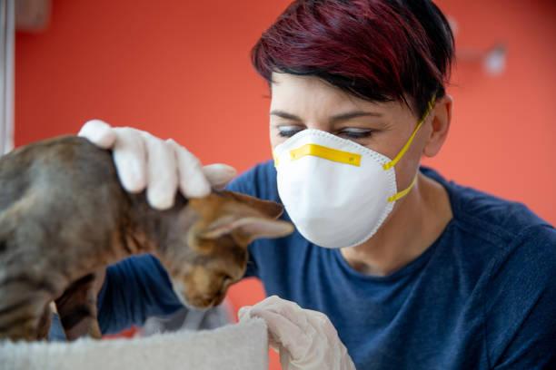 Mid Adult Frau mit schützender Gesichtsmaske und Handschuhe stroking eine Katze - Stock Foto – Foto