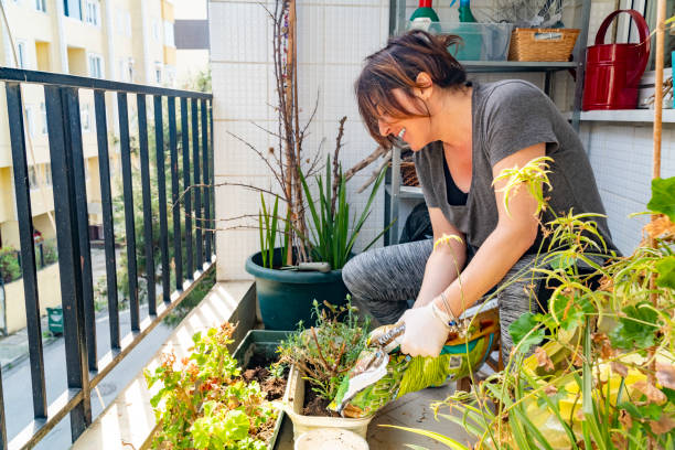 A mid age woman caring her plants. stock photo
