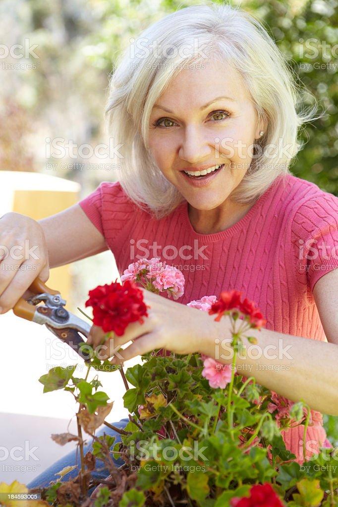 Mitte Alter Frau Stutzen geraniums – Foto