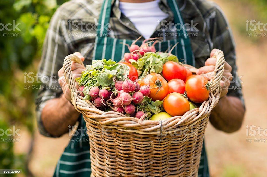Mid section of farmer holding a basket of vegetables stock photo