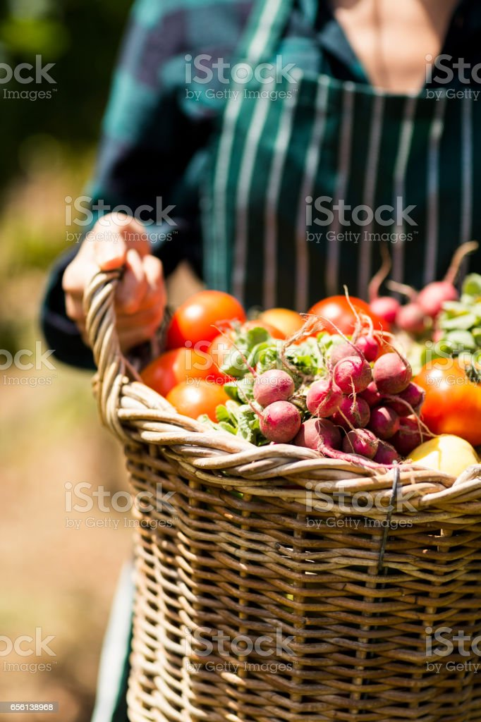 Mid section of female farmer holding a basket of vegetables stock photo
