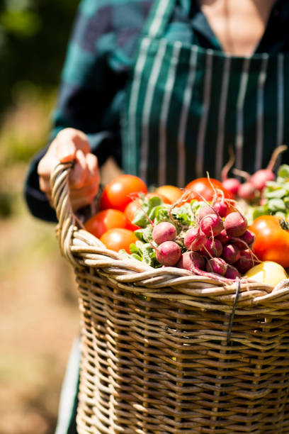 mid section of female farmer holding a basket of vegetables - organic farm stock photos and pictures