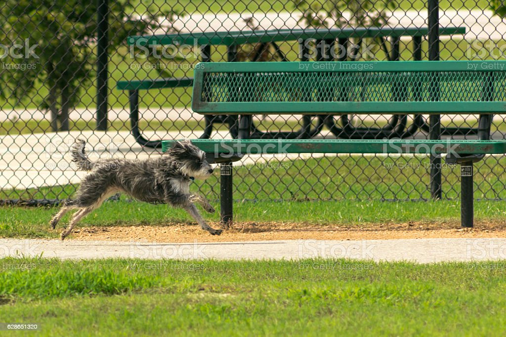 Amazing Midair Small Dog Running Past A Park Bench Stock Photo Frankydiablos Diy Chair Ideas Frankydiabloscom