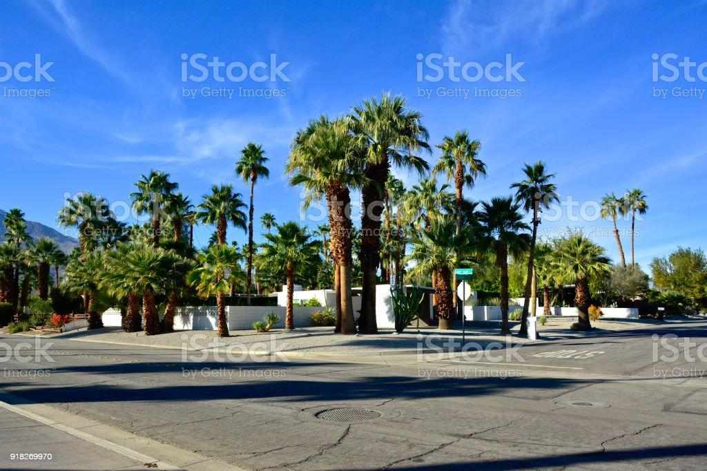 Mitte Des Jahrhunderts Moderne Häuser, Bäume Palm Straßenbild In Palm  Springs, Kalifornien, Vereinigte